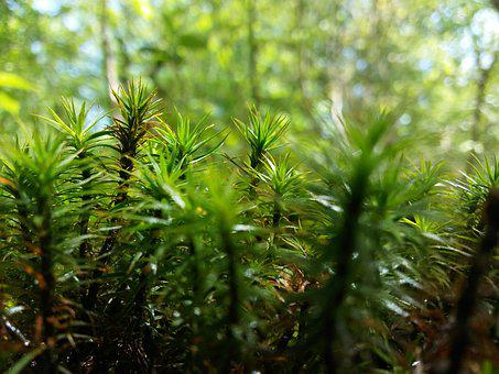 Vegetation, Nature, Green, Thorn, Botanist, Prickly