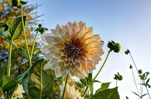 Autumn, Flower, Blossom, Bloom, Background, October