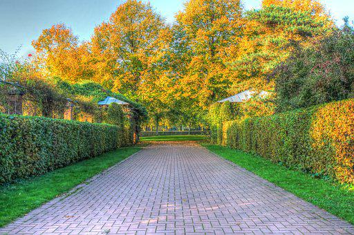 Autumn, Leaves, Trees, Background, October, Hdr, Away