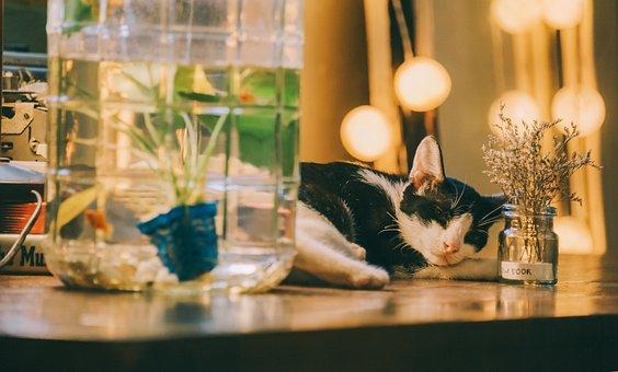 Cat, Sleep, Cute, Animal, Pet, Fur, Rest, Kitten, Sweet