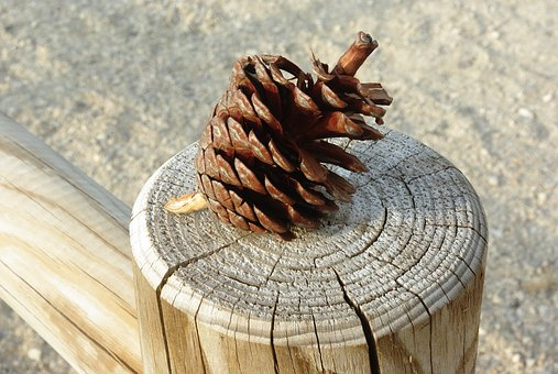 Post, Wood, Closing, Pinecone