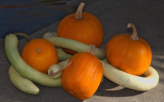 Pumpkins, Still Life, Autumn, October, Natural