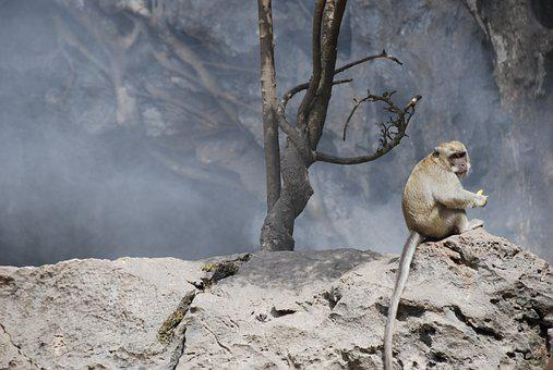 Monkey, Smoke, Homeless, Alone, Sad, Sitting, Rocks
