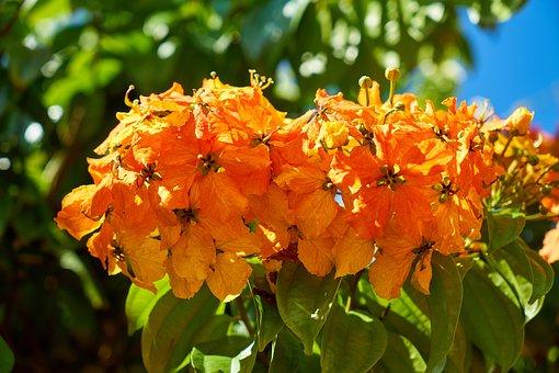 Flower, Spring, Orange, Nature, Plant, Summer