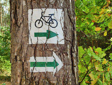 Forest, Cycle Route, Tourism, The Path