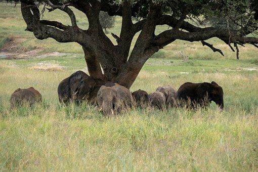Elephant, Tree, Serengeti