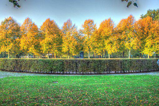 Autumn, Leaves, Trees, Background, October, Hdr, Meadow