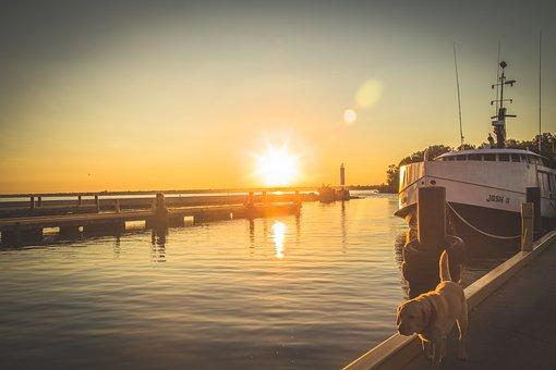 Boat, Dock, Dog, Golden Lab, Yellow, Pier, Water, Lake