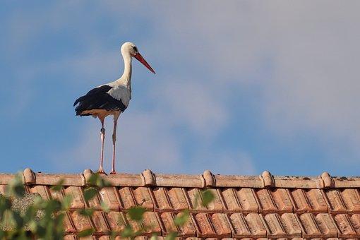 Stork, Roof, Bird, Rattle Stork, Gluck, White Stork