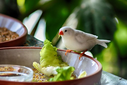 Bird, Eat, Plumage, Animal, Nature, Bill, Animal World