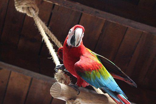 Parrot, Colorful, Animals, Bird, Ara, Exotic, Feather