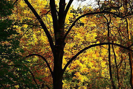 Tree, Trunk, Branch, Autumn Foliage, Silhouette