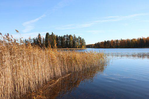 Lake, Autumn, A Bed Of Reeds, Nature, Landscape, Water