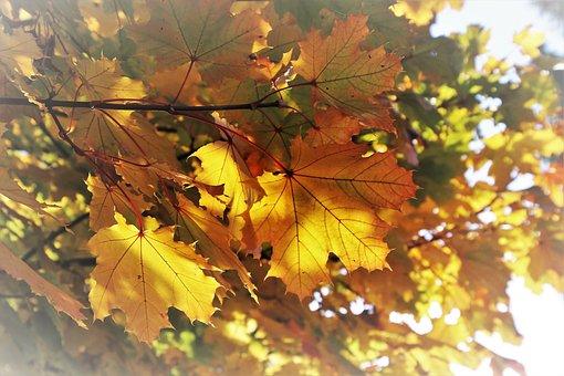 Yellow, Sunny, Autumn, Foliage, Plant, Mood, Clone