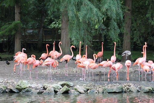 Animals, Zoo, Beauval, Nature, Zoology, Wild
