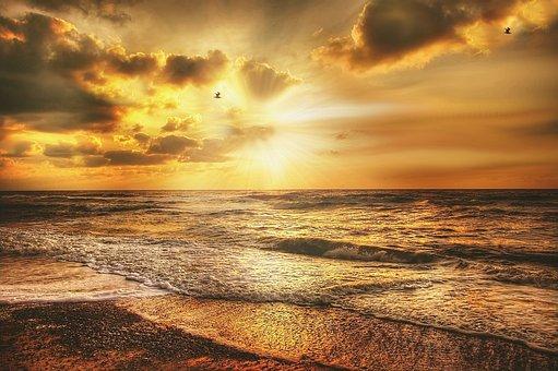 Seagull, Sun, Sea, Sky, Bird, Water, Nature, Sunset