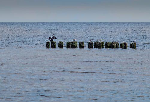 Cormorant, Sea, Breakwater, Birds, The Seagulls