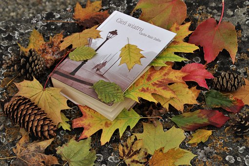 Foliage, Reading, Book, Literature, Relaxation, Autumn