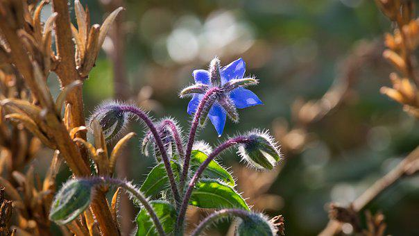 Wild Flower, Blue, Autumn, Nature, Close Up, Violet