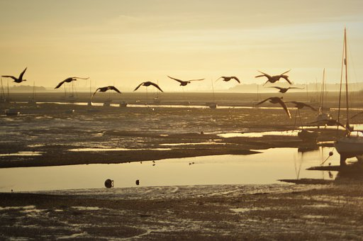 Geese, Coast, Estuary, Sea, Nature, Landscape, Seascape