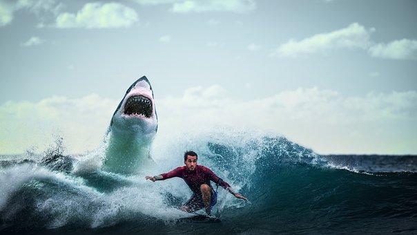Shark, Fish, Wild, Danger, Whale, Predator, Dangerous