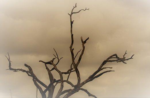 Dead Tree, Dust Wind, Savannah