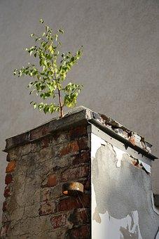 Decay, Ruin, Masonry, Ailing, Dilapidated