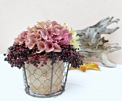 Hydrangea, Late Summer, Autumn, Elderberries, Elder
