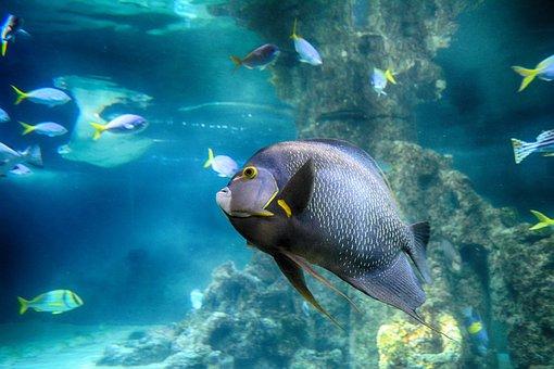 Fish, Toy, Aquarium, Water, Underwater, Swim, Exotic