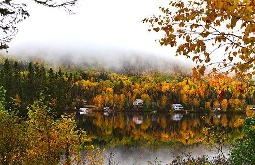 Landscape, Fall, Nature, Forest, Leaves, Fog, Trees