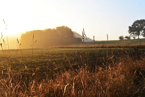 Field, Fog, Foggy, Halme, Landscape, Mood, Meadow, Dawn