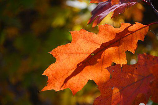Autumn, Forest, Nature, Forests, Tree, Foliage