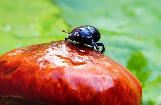 Forest Beetle, The Beetles, Mushroom, Maslak, Hat