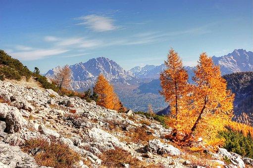 Monte Cristallo, Dolomites, Forest, Summer, Massif