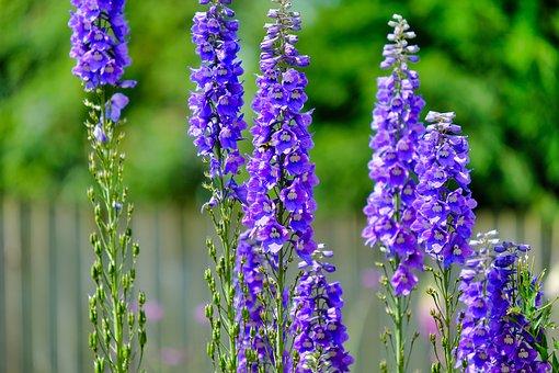 Violet, Flowers, Bloom, Plant, Purple, Garden, Summer