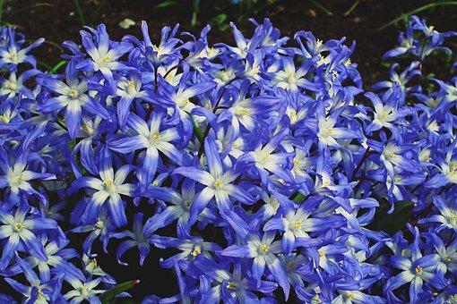 Flowers, Blue, Spring, Garden, The Petals, Beauty