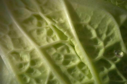 Savoy, Vegetables, Kohl, Savoy Cabbage, Green, Vegan