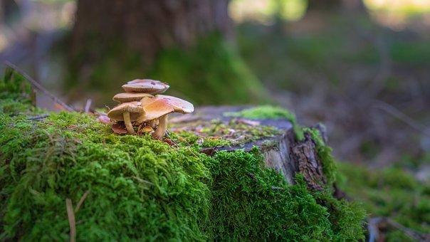 Autumn Forest, Mushrooms, Autumn, Leaves, Forest Floor