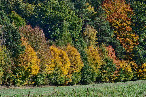 Leaves, Deciduous Tree, Autumn, Forest, Nature, Tree