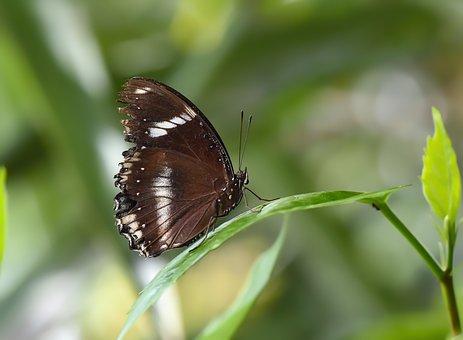 Butterfly, Kelebek, Böcek, Doğa, Nature, Garden, Macro