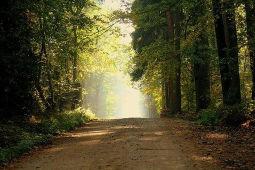 Forest, Morning, The Fog, Spacer, Landscape, Tree, Mood