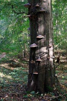 Mushroom, Log, Tree Fungus, Tribe, Mushrooms