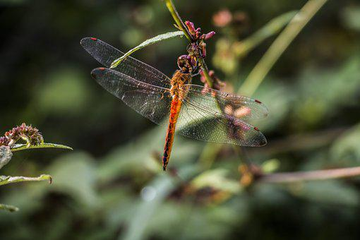 Dragon Fly, Wings, Nature, Mood