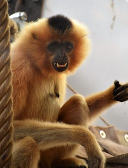 Monkey, Animal, Nature, Zoo, Mammals, Primate