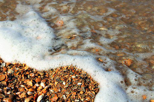 Sea, Beach, Pearl, Shell, Seashell, North Sea, Water