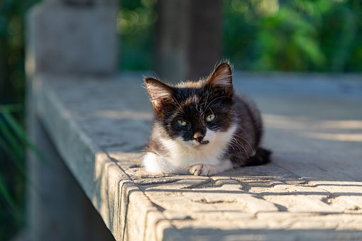 Kitten, Cat, Black, White, Cute, Pet, Hairy, Curious