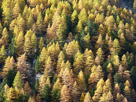 Larch, Fall, Alps, Trees, Mountains, Forest, Points