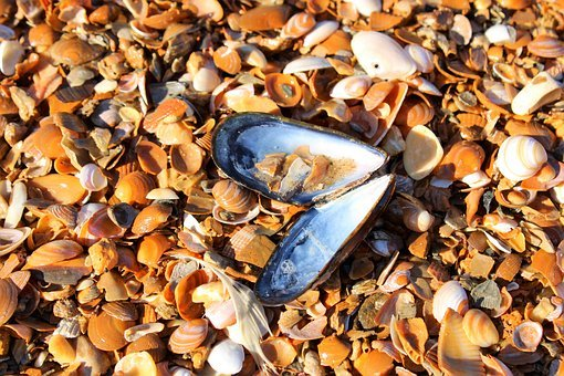 Sea, Beach, Pearl, Shell, Mussel, Mussel Sea Shell