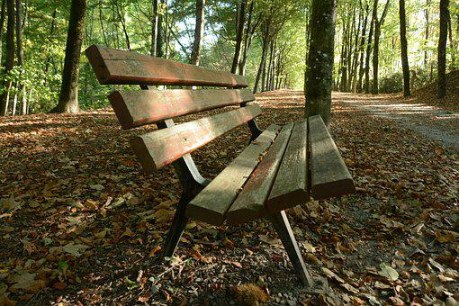 Bench, Forest, Wood, Tree, Park, Solitude, Seat