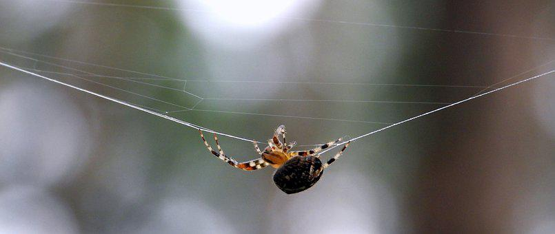 Spider, Cobweb, Hotel, Figure, In The Fall, Cobwebs